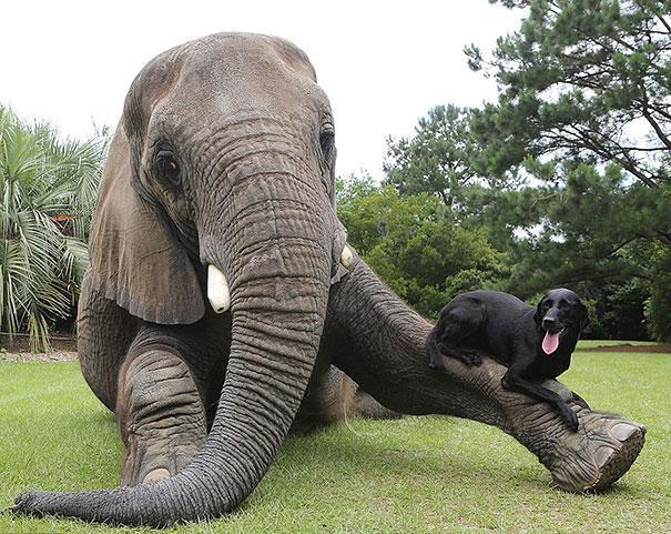 cerita lucu soal gajah